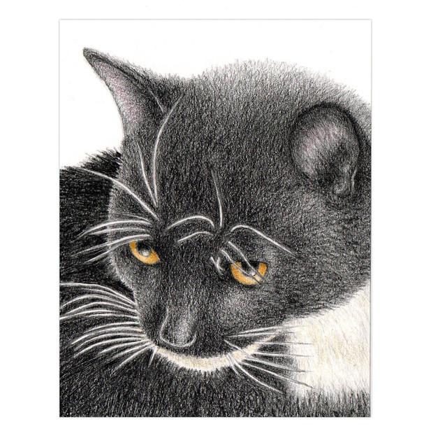 Poppet the Cat