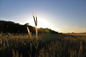 FrohLaWi – solidarische Landwirtschaft für Frohnau und Umgebung
