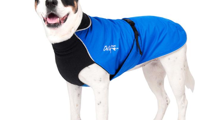 Chilly Dogs - Alpine Blazer, Noir/Bleu Royal