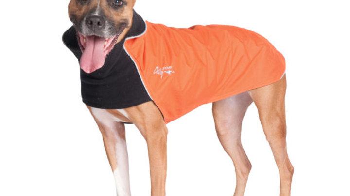 Chilly Dogs - Trail blazer, Noir/Orange