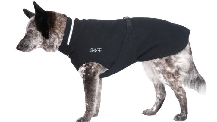 Chilly Dogs - Chilly Sweater, Noir