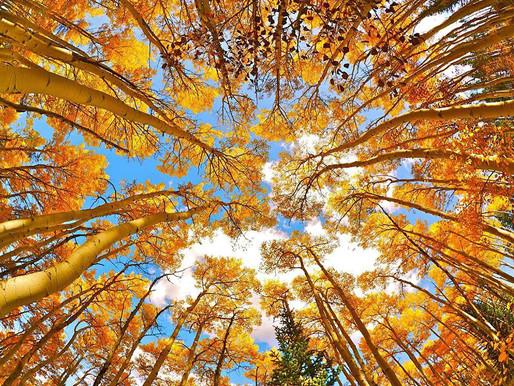 Fall in Love with Breckenridge