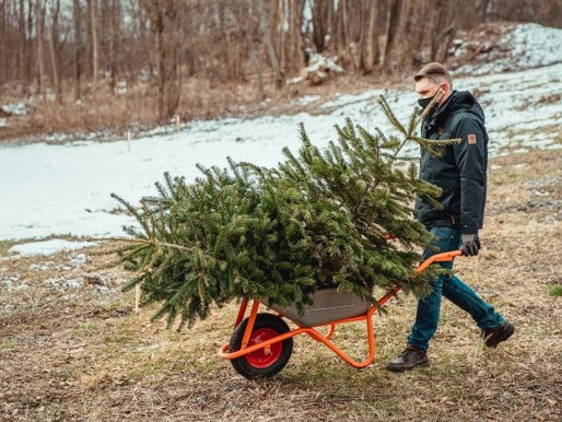 Lithuanian capital plants world's first Christmas Forest from residents' potted holiday trees