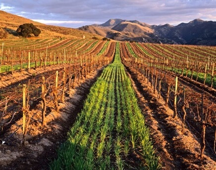 Fall in Love with Santa Maria Valley