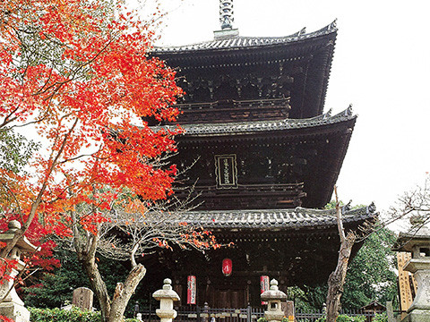 Fall in Love with Japan