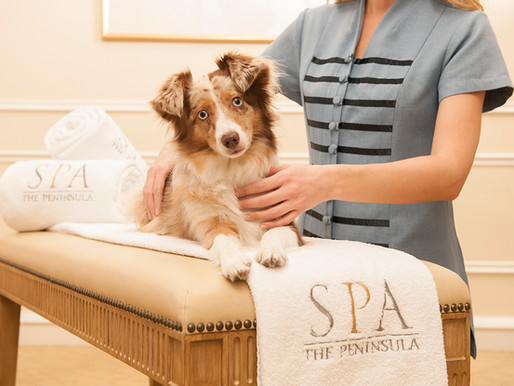 """Beverly Hills Launches Pet-Friendly """"As You Wish"""" Campaign"""