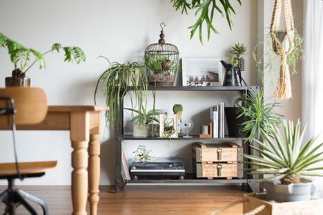 Indoor Green Style