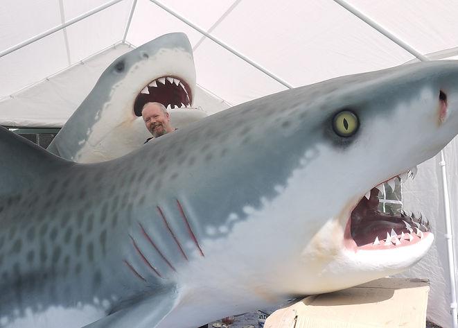two sharks - 1.jpg
