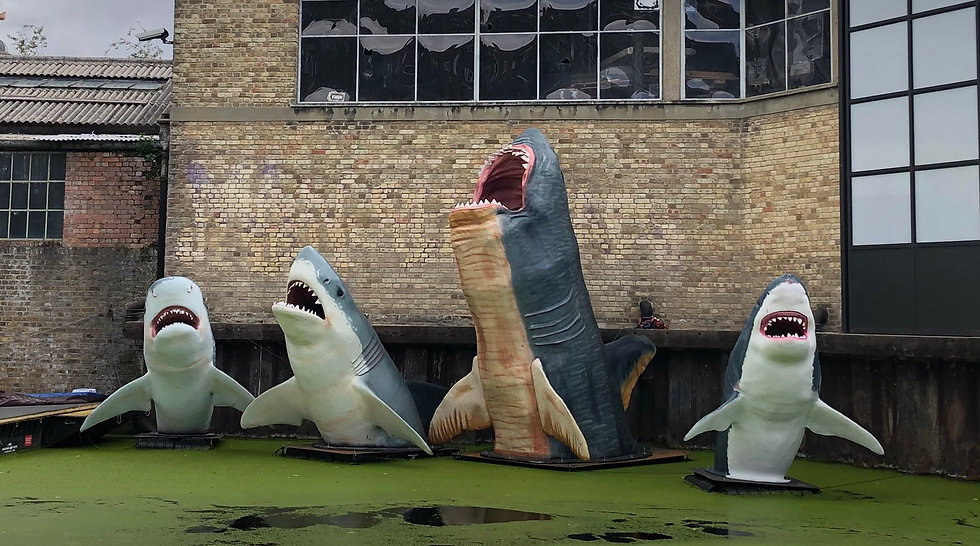 Hoxton Sharks