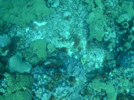 Saving Coral Reef
