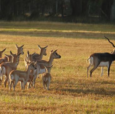 Native Wildlife Tours