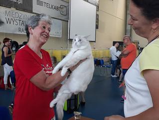 Międzynarodowa Wystawa Kotów Tczew 2019 r.