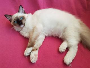 Nowa koteczka w naszej hodowli ;)