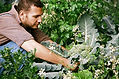 We work with & can recommend gardeners & arborists