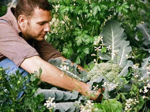Kalkcyanamyde, de sleutel tot succes voor een rijke oogst.
