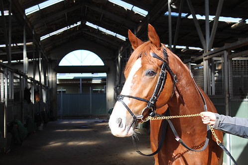 Crossover Noseband With Brass/Stainless Steel Fittings