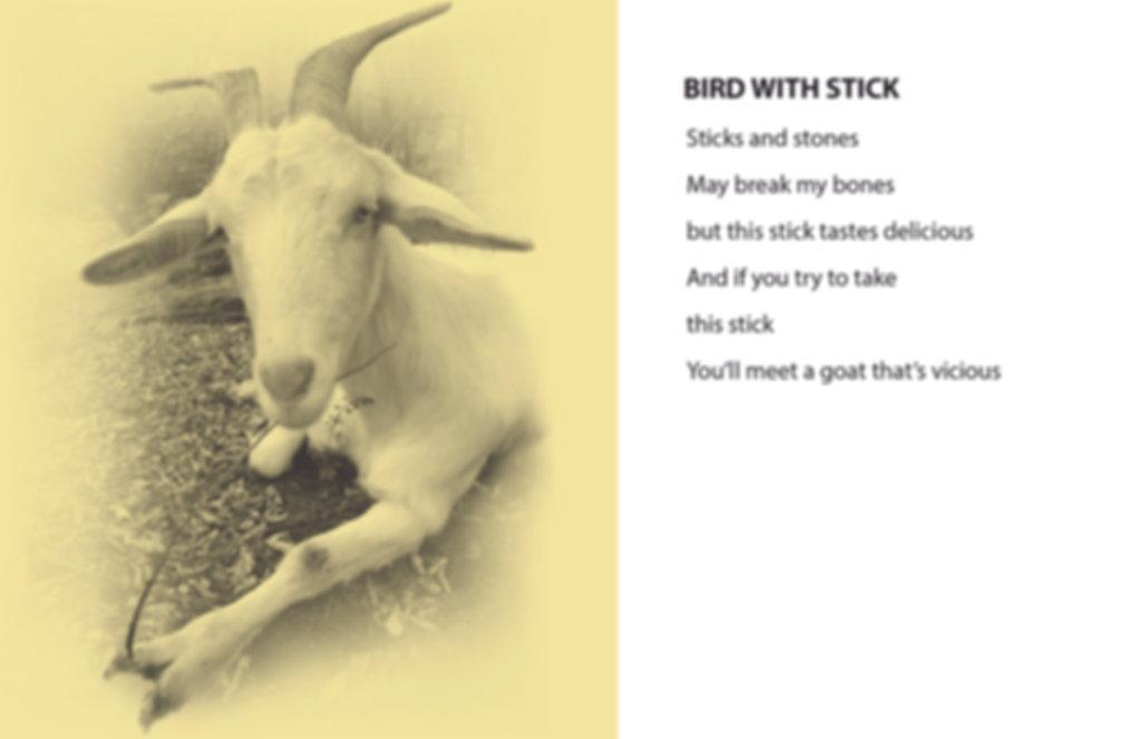 GOETRY BIRD WITH STICK.jpg