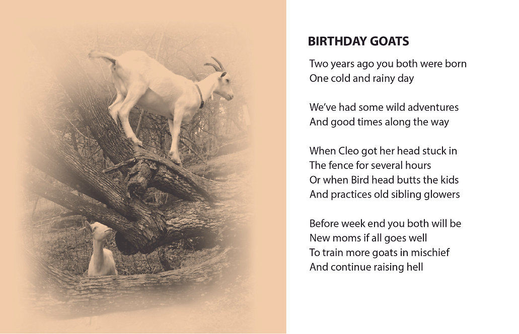 GOETRY BIRTHDAY GOATS.jpg
