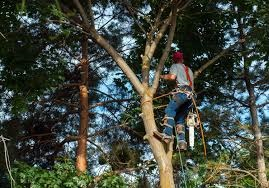 Tree Trimming Limbs
