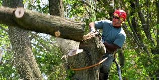 Tree Climber Removing Section