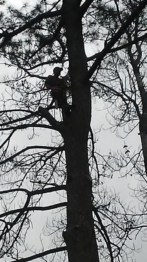 treeclimbing20