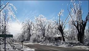 Ice storm damaged trees