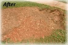 Stump After