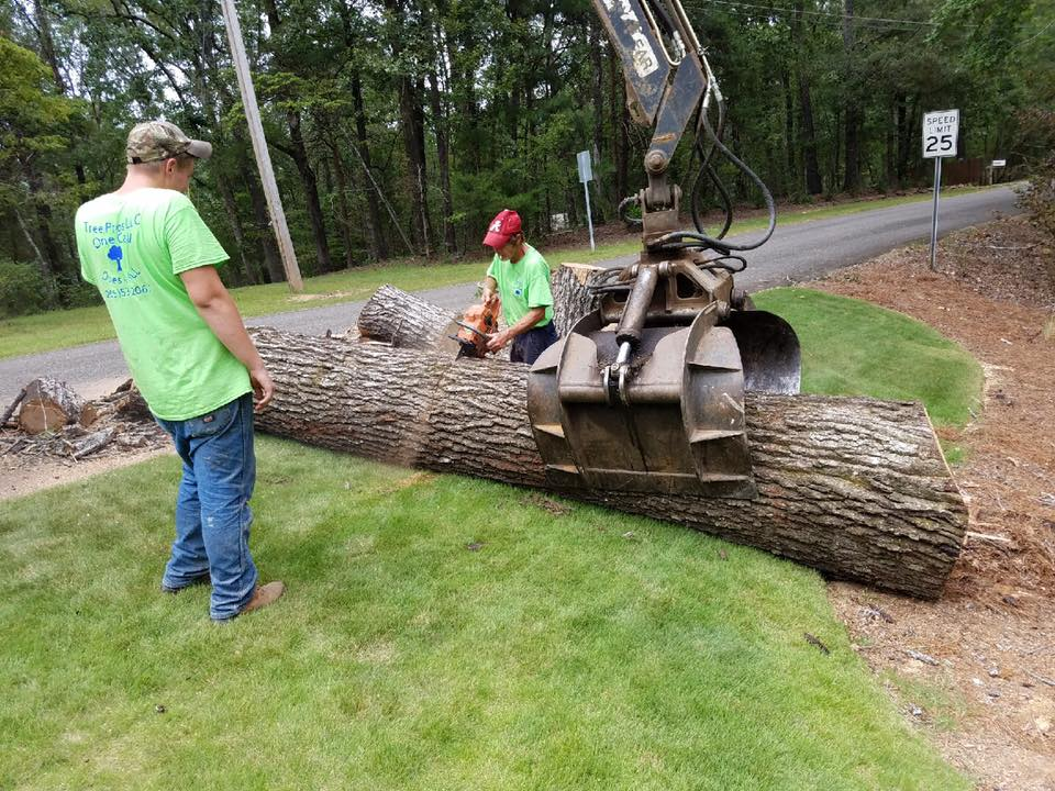 Cutting tree into Sections