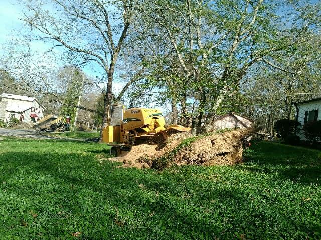 Stump Grinding Stumps