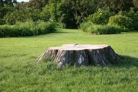 Stump to Be Ground