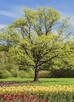 Top Ten Tree Problems