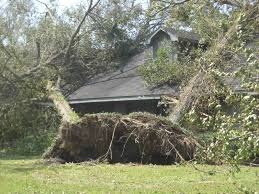 High winds uprooted tree