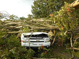 Tree Storm Damage Removal-Cleanup