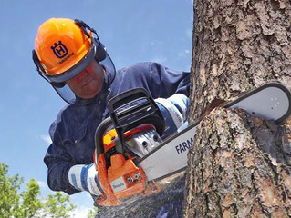 Tree Evaluations