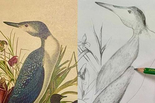 Drawing Nature with Audubon!