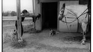 Amy and Goose, Oklahoma Training Track, Saratoga Springs, New York, 2013