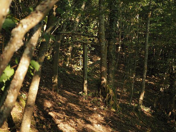 bosque antes de llegar aradillos .JPG