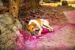 Perro rosado