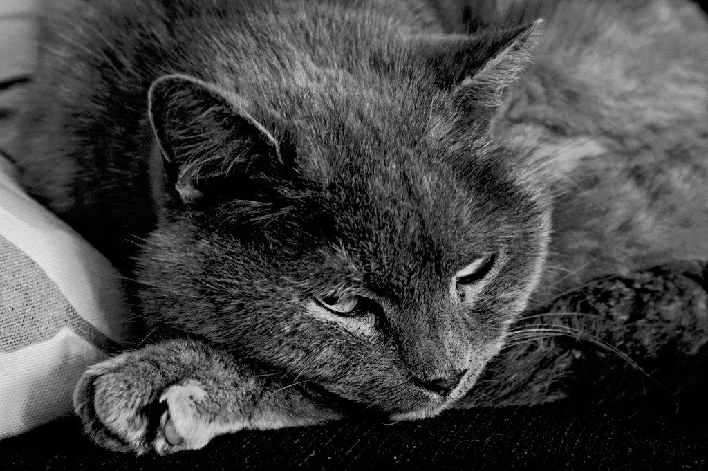The cat_lzn