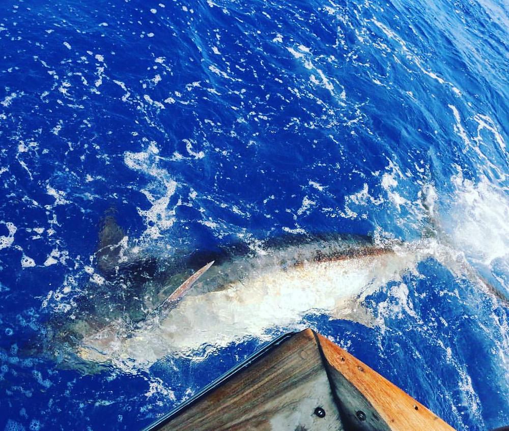 Kona Fishing Marlin