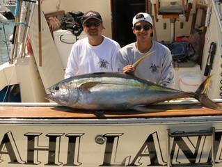 Marlin and Yellowfin Tuna (Ahi)
