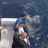 Kona sportfishing charters