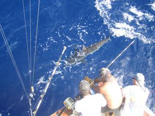 Fishing Off the Kona Coast