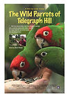 the-wild-parrots-of-telegraph-hill.jpg