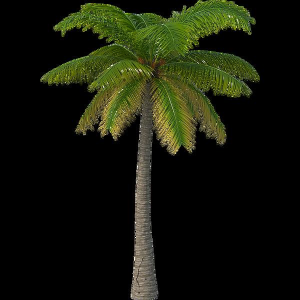 Cutout Palm Tree 11_3D_p.png