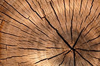 this-new-super-wood-material-is-stronger