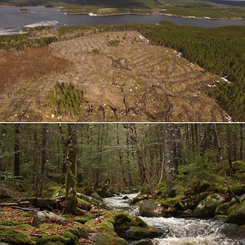 clearcuts.png