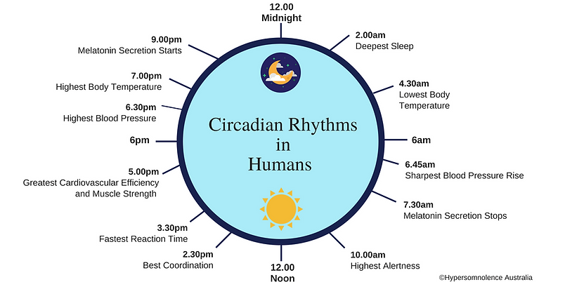 Circadian Rhythms in Humans (1).png