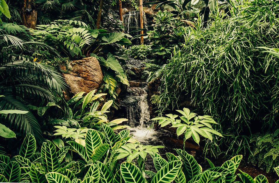 waterfall tiny tropical.jpg