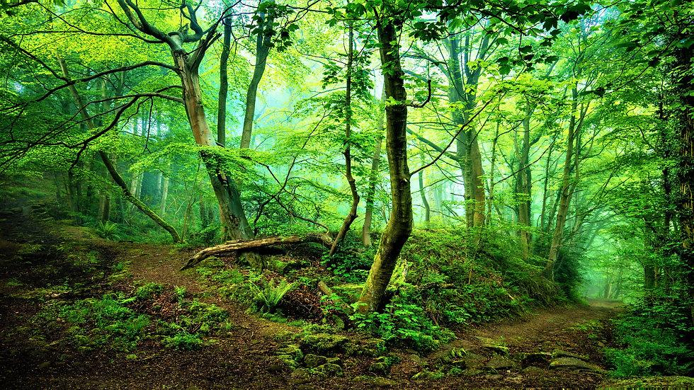 green mystical forest.jpg